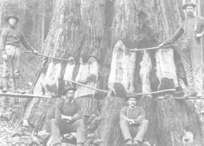 Lumberjacks in historic photograph featured image for narration voice over demo.