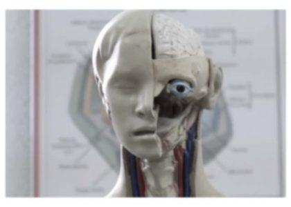 plastic model human head physiology, blurred